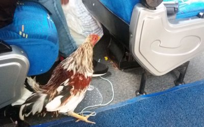 Colombian Chicken Bus Modern Style
