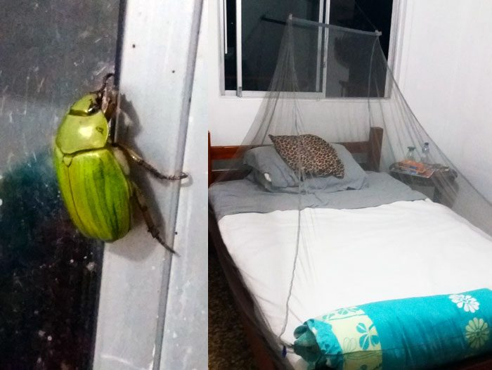 Mosquito net must have for travel - header