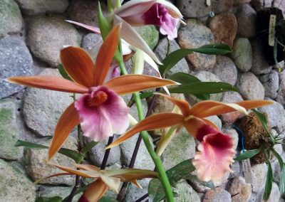 Panama orchid center: unknown
