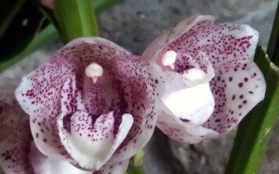 Orchid Center, El Valle de Antón, Panama