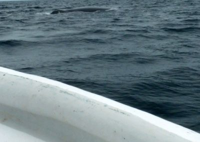 Panama whale watching 7 - so very close