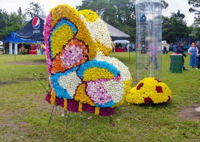 Volcan Flower Festival: butterfly