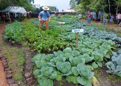 Volcan Flower Festival: veggie garden 1
