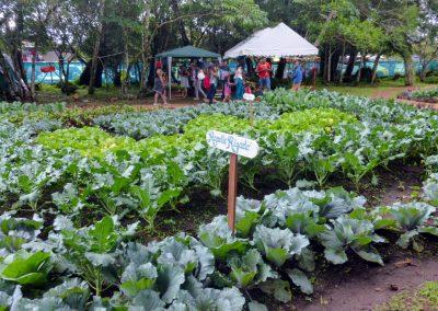 Volcan Flower Festival: veggie garden 2