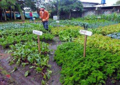Volcan Flower Festival: veggie garden 3